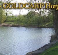 Goldcarp See - Karpfenfischen in Ungarn 3