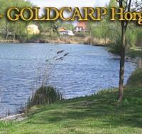 Goldcarp See - Karpfenfischen in Ungarn 4