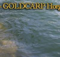 Goldcarp See - Karpfenfischen in Ungarn 5